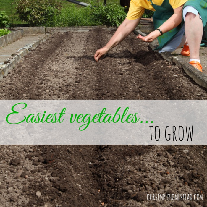 easiest-vegetables-to-grow